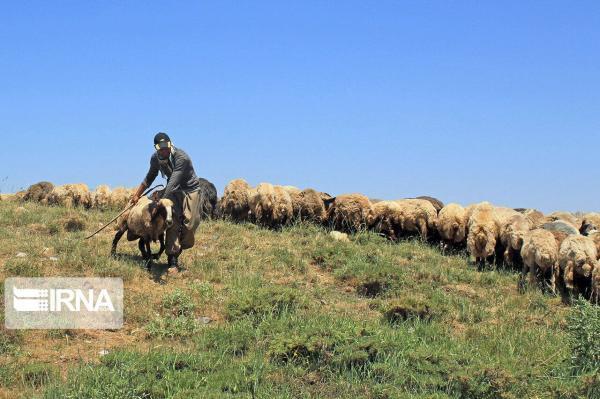 خبرنگاران ورود پیش از موعد دام به مناطق ییلاقی استان سمنان پیگرد قانونی دارد