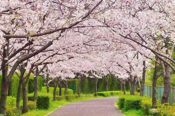 بهترین اقدامات برای سلامتی بدن در فصل بهار